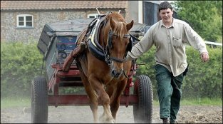 Union Farm showcases historic farming practices with animals and fields