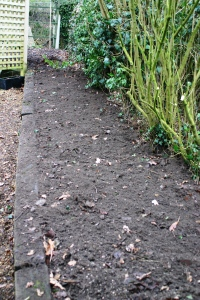The border after clearing- ready for some annuals- marigolds?
