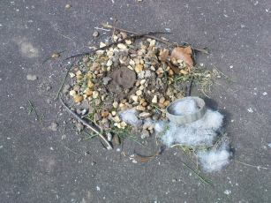 Simple pleasures- a nest created from cut grass, gravel and cotton wool