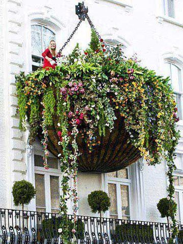 PicPost: Hanging baskets are so boring...