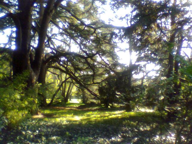 PicPost: Great Garden @ Cambridge Botanic Garden