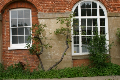 Shrubs in front of the southern wall of the old Workhouse- showing the arcading that was once open