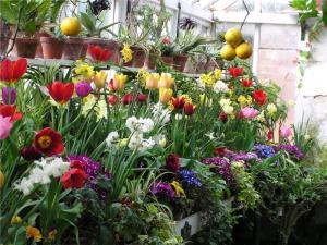 Inside the orangery- a heady mix of seasonal colour and fragrance