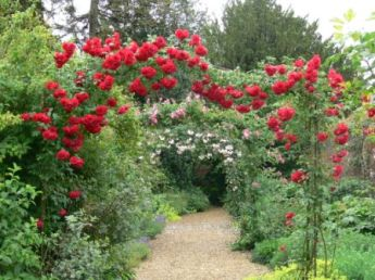 Roses are one of the splendours of the gardens