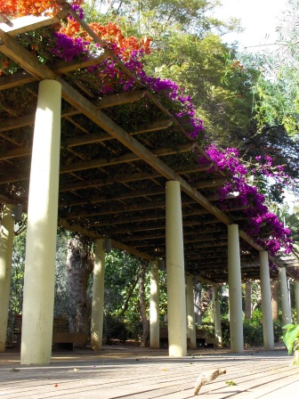 A flower-covered pergola in the Canary Islands