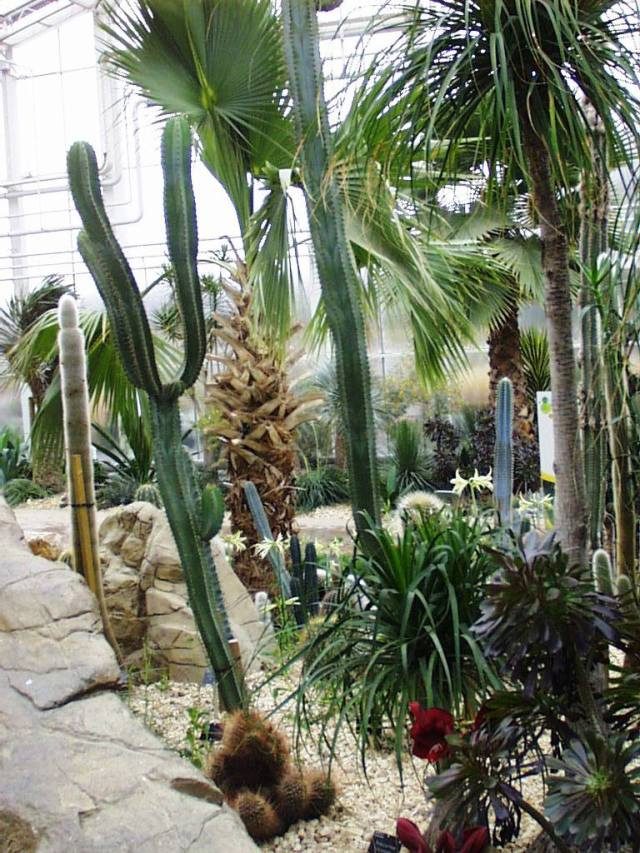 wisley cacti