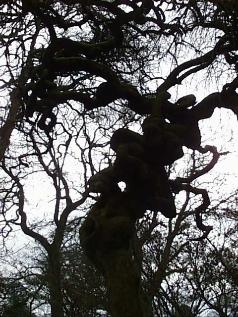 tree puzzled