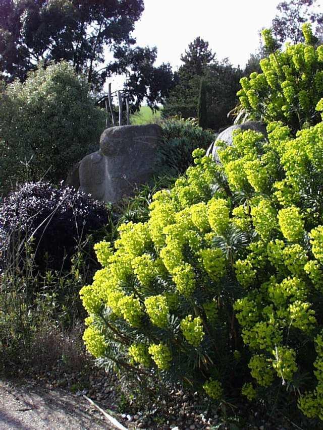 PicPost: Great Garden @ Hyde Hall