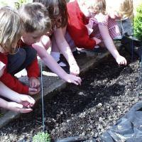 Growing Children 1: School Garden start up in seven steps