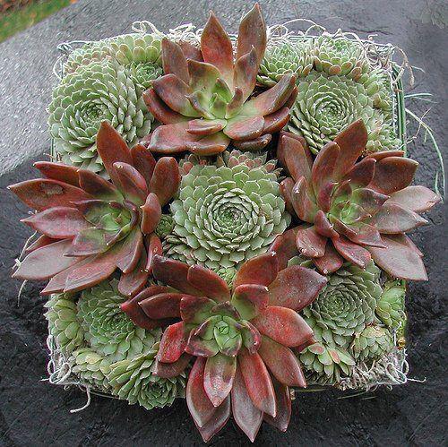 PicPost: Succulent