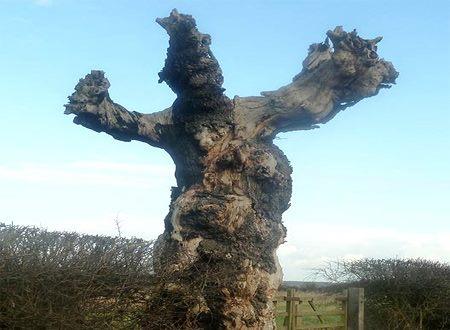 PicPost: Tree hugger