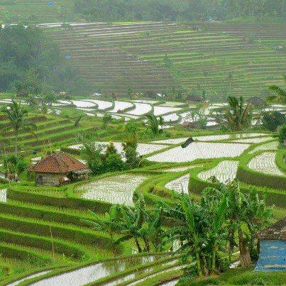 PicPost: Rice weather we're having...