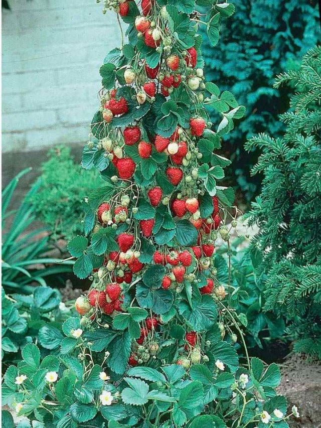 PicPost: Strawberry Fall
