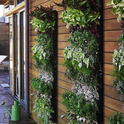 PicPost: Herbical garden