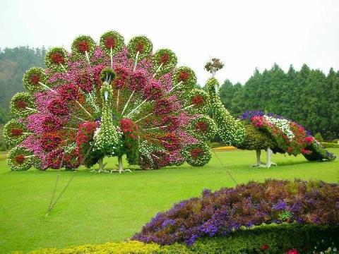 PicPost: Flower Fan