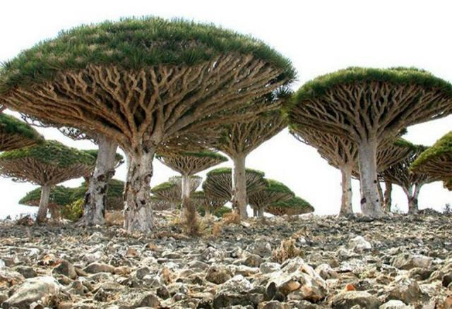 PicPost: Not mushroom