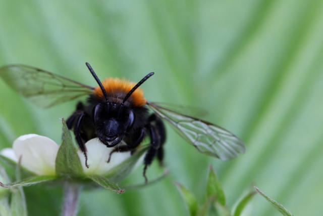 PicPost: Bee miner