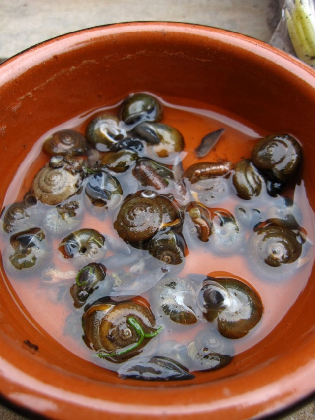What's your favourite tipple? Beer traps are effective at controlling slugs and snails
