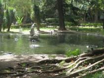 Estrela -pond and statue