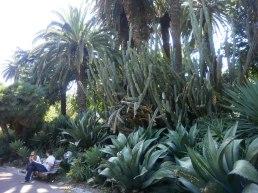 Estrela -exotic planting