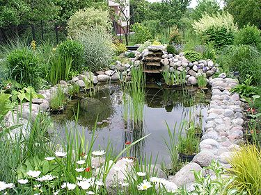 A garden pond can help with capturing excess water and improve biodiversity