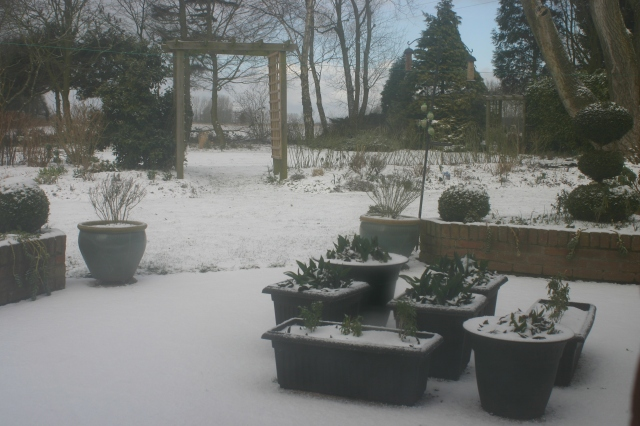 Winter returns to the Old School Garden