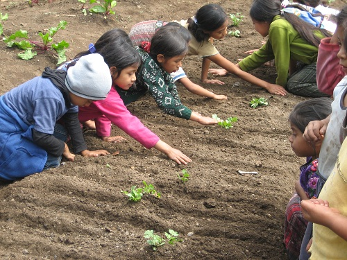 How to sow seeds is a basic gardening skill that all children need to learn