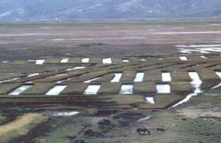 tiwanaku raised field system