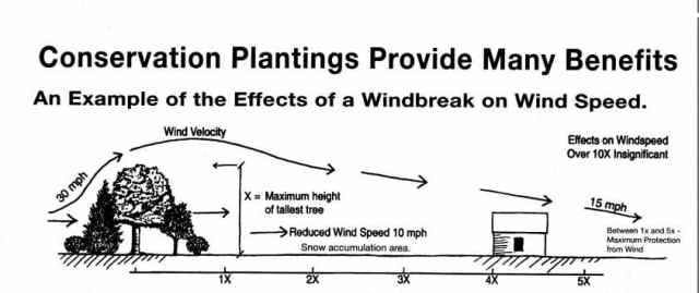 wind breaks can reduce the impact of strong winds