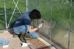 Keeping greenhouse glass clean helps to maximise sunlight