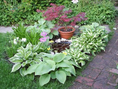 Hosta border edge