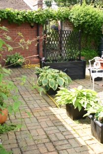 Old School courtyard garden- Hostas in containers