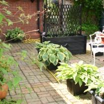 Old School courtyard garden- Hostas in containers