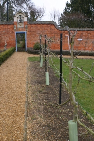 Espalier- trained fruit
