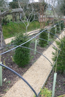 New Yew tunnel in 'The Wilderness'