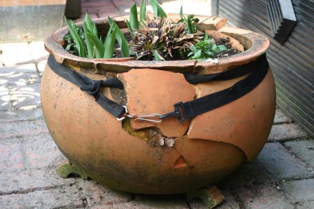 One of two Terracotta pots that have just about 'given up the ghost' as a result of frosty weather