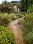 luxuriant self-sown planting