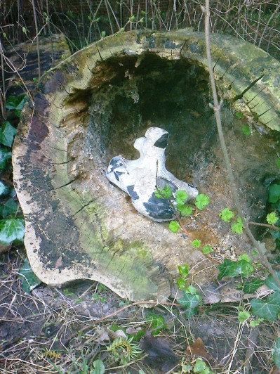 A bit of 'land art'- we thought it was a pigeon nestling inside!