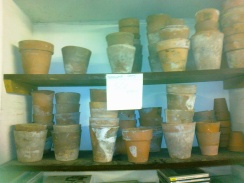 Teracotta pots for sale- 50p each (didn't buy any)