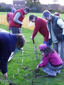 School- hedge planting