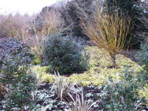 Winter walk planting