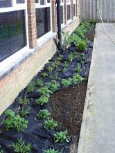School- Nectar Bar planting