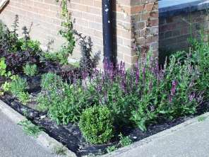 School- 'Nectar Bar' planting