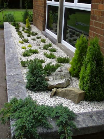 Riased bed -heathers and conifers