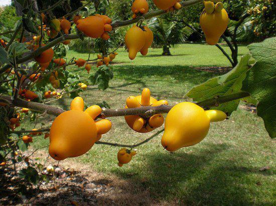PicPost: Gourd heavens?