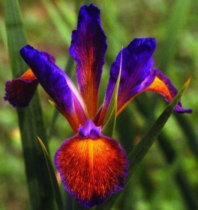 PicPost: Iris my case