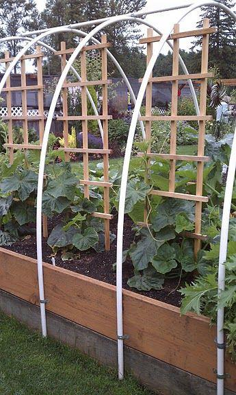 PicPost: Raised Beds with a difference