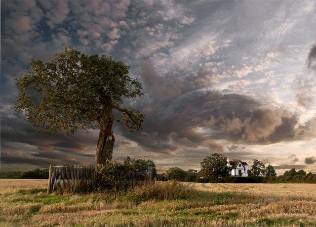 PicPost: Royal Oak