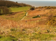 The cliff top walk