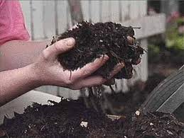 Adding home made compost or other organic matter to your soil will improve its structure and nutrient levels
